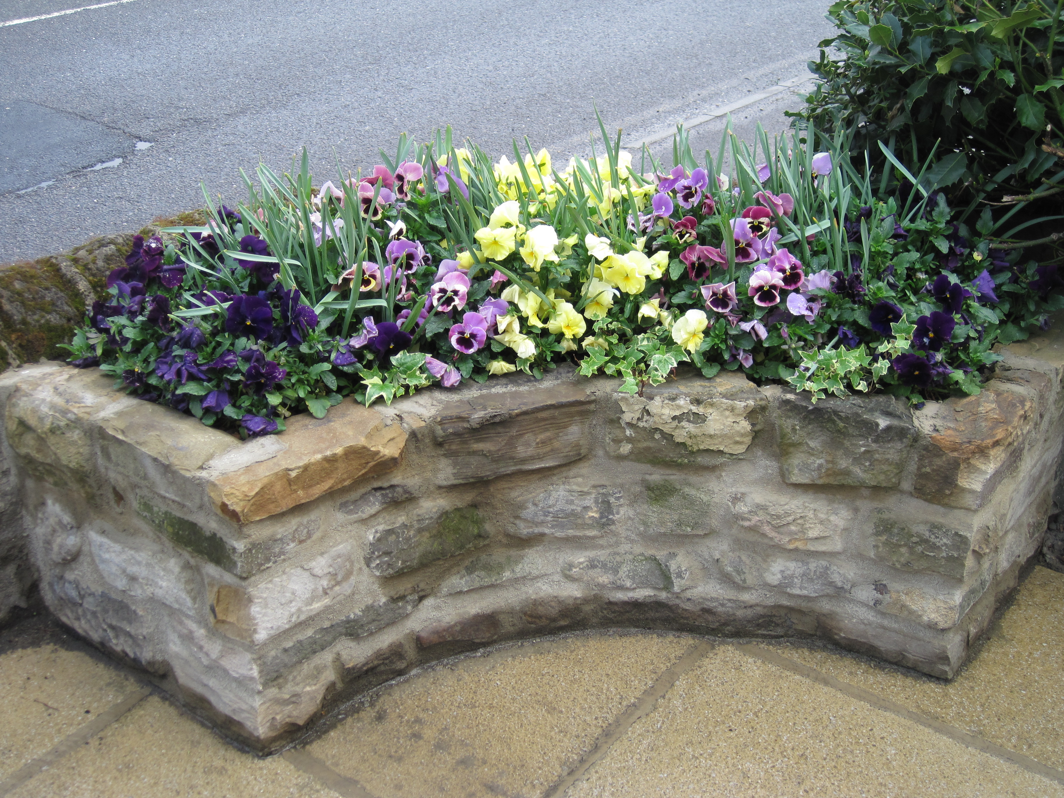 Commercial frontage - seasonal planting