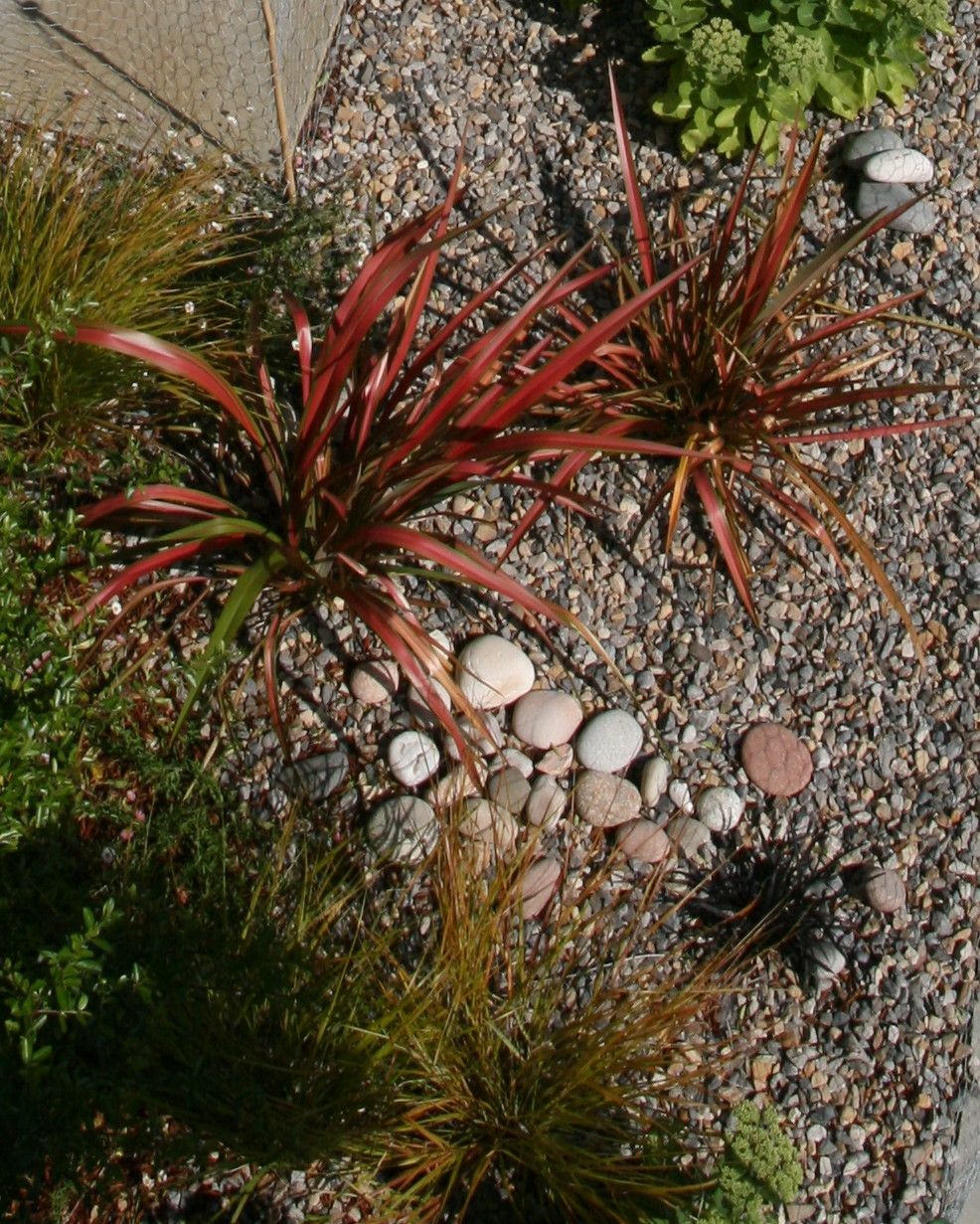 Contemporary garden plant detail